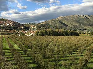 19 Olive Tree Groves.jpg
